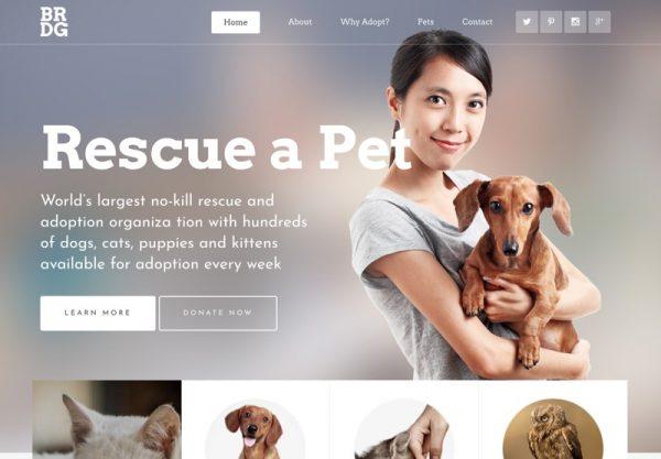 Pet Sanctuary Web Design Theme